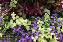 FLORA & FOLIAGE - UNIQUE BY DESIGN / We are in this garden together... such a short time! Enjoy! / by Helen Weis