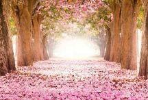 Color // Pink
