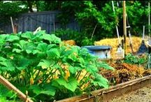 Plant a Vegetable Garden / Growing our own food....what? / by ღ Jenn P ⊱╮