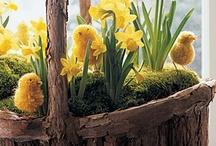 Springtime / by Tiffany Baird