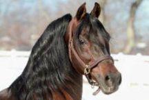 Horses / by Tiffany Baird