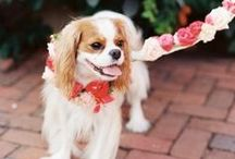 Pets at Weddings / How to include your beloved pet in your wedding.