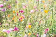 My Flower Garden / Flowers to plant in my garden
