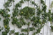 foliage / by Kimberly Atlas Harrington