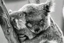 FAUNA / animals / by Kimberly Atlas Harrington