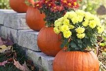 Fall Decorations / by Erin Sauer