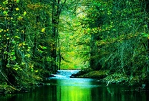 Glimpses of Heaven / The birds of the air nest by the waters; they sing among the branches. He waters the mountains from his upper chambers; the earth is satisfied by the fruit of his work. ~Psalm 104:12,13