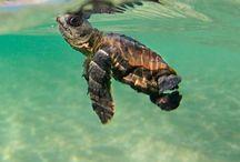 C R E A T U R E S / Live in the sunshine, swim in the sea, drink the wild air... / by Rachel Knowlton