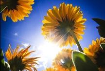 Summer Sun!