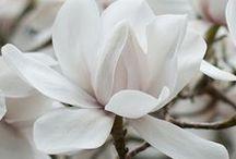 Nature: Flora