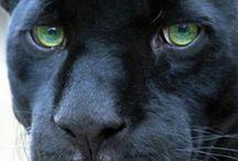 Black Animals / by Yvonne Peraza