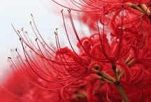 Flower Story: Red