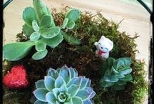 Terrariums & Succulents / by Flower Empowered
