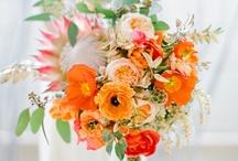 Flower Story: Orange
