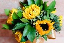 Flower Story: Yellow