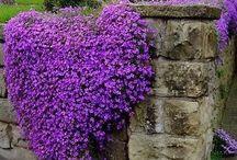 The Colour Purple / purple