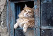 Here kitty kitty kitty... / by Anita Erkkila Mccoy