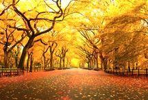 Autumn Colourful Romantic