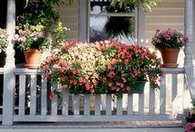 Container Gardening / by Helen Audirsch