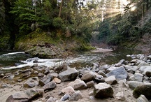In Our Natural Habitat / UCSC is known for its beautiful campus, but the beauty does not end there.  Here are a few examples of natural attractions in and around campus.