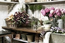 Potting Sheds & Benches, Greenhouses, Cold Frames / by Helen Audirsch