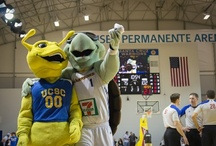 UCSC Night at the Santa Cruz Warriors Arena / The Santa Cruz Warriors hosted UCSC night on March 1st in an event that rallied campus affiliates and locals alike.  The night included a dance battle between Sammy the Slug and Mav'Riks, a performance by UCSC cheerleaders, the national anthem by UCSC's Acquire A Capella group, and members of our Men and Women's basketball teams tossing shirts to the fans.  The night was an overall blast.       - Photos by Rob Knight