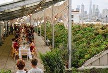 Urban Farmin'