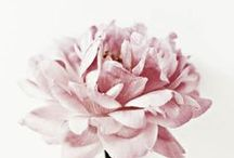 Flowers / by Gemma Milly