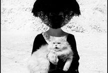 Glamourpussy / Kittys, Cats, Pussies & Kittens in Glamourous editorials & photos
