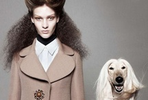 Man's Best Friend - Dogs and Fashion