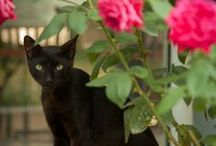 Black Cat Couture / fashionable black cats / by Michelle Villasenor-Mora