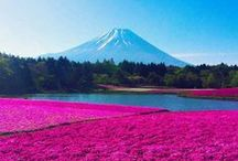 Japan / Take a journey of endless discovery and see stunning Japan. Read more on our holiday guide: http://travl.to/r20g9