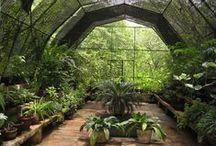 ~ Greenhouse ~ / Greenhouse, Gardening, Kasvihuone, Puutarha