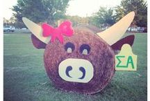 Sigma Alpha Sorority  / Texan by birth, Sigma Alpha by choice! / by Hannah Morgan Miller