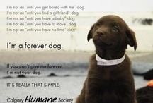Doggies Love / Everything related to human's best friend.