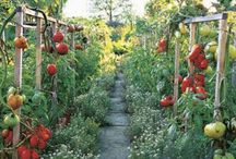Pie in the Sky Ranch / Farm, Garden, Ranch, and Farmer's Market Ideas / by Lara Clement
