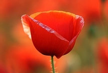 My favourite colour's Red! / by Rhian Nicholl