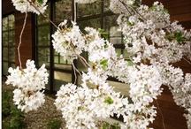 Japanistic Blog / by Sydne Didier