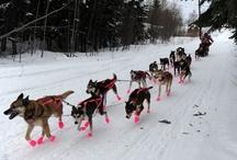 {GROUP} Huskies & Malamutes - Best Dog Breeds Ever!