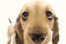 Welcome / by We Love Dogs ♥ Guide Dogs Worldwide ♥