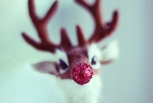 Nadal/Christmas / by Iria Martínez Teijeiro