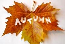 My Favorite Season / autumn   fall   september   october   november   outdoors   nature   falling leaves