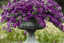 Flowers/Containers / by Sandy Hilliard