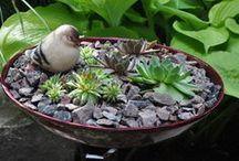 Succulents / by Sandy Hilliard
