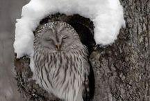 Owls / by Sandy Hilliard