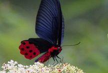 Butterflies, Ladybugs, Dragonflies, Etc