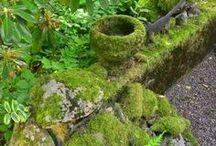 Moss / by Sandy Hilliard