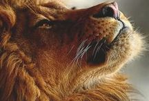 Cats, Big Cats & Dogs