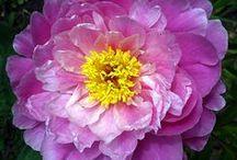 Blogs I Like - Gardening