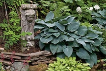 Flowers/Containers Hostas / by Sandy Hilliard